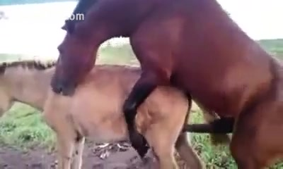 Woman fucking a horse