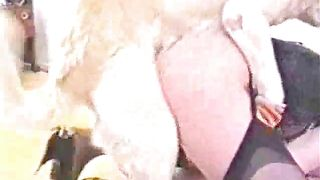 My fluffy dog is nasty