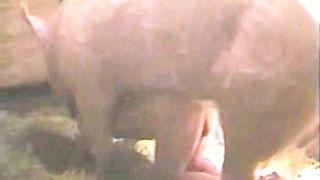 Huge boar drilled a brunette hair whore
