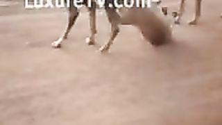 Videos of dogs fucking and a woman