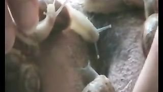 Horny slut enjoying enjoyment with sticky insects
