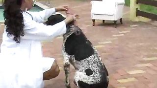 Veterinary gives sensuous treatment to dogs
