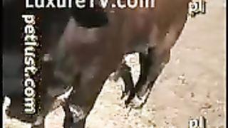Sexy Bitch Sucks Horse