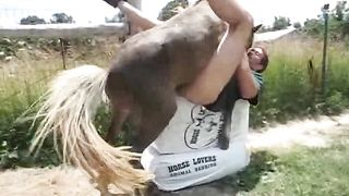Horse copulates stud at the farm
