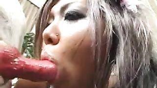 Tanned oriental sweetheart with a excellent butt blowing 2 animals and getting licked