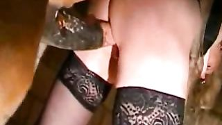 Woman in black stockings films herself when fucked by a horse