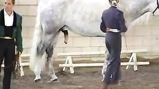 White horse with a giant cock receives sexually aroused in public
