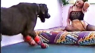 Amazing college university wench getting drilled by a dog in this gripping beast fetish flick