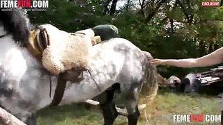Premium horse blow job during complete webcam zoophilia XXX