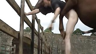 Man loves fucking a horse with his dick in a special zoophilia home video