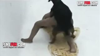 Dog sex video XXX - Curly-haired Latina gives a deep blowjob for a black dog