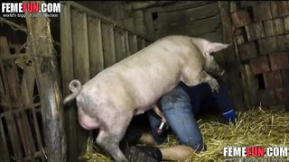 A Pig fucks a my crazy husband! Boar mating man ass!