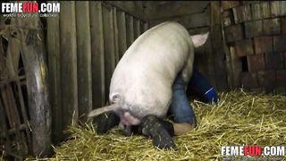 A Pig fucks a my crazy husband! Boar mating man ass!