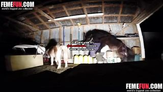 Dirty-minded hottie comes to the barn to get banged brutally by a huge stallion in a zoo porn vid