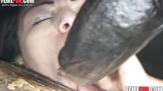 Slutty girl mounts a horse's huge dick for the first time and gets incredibly hot orgasm