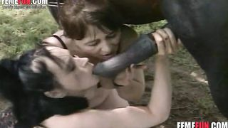 Two ugly mature sluts deepthroat and fuck a horse making their crazy stud watch