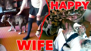 Mad husband laughs when his slut wife gets anal fucked by their dog