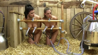 Cute amateur BDSM two babes chained to a milking machine