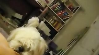 Cute little puppy licking some muff